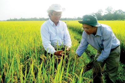 """Những """"bông lúa vàng"""" trên cánh đồng xứ Quảng."""