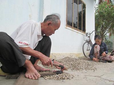 Thu nhập ổn định của nhiều gia đình ở biển từ nghề bấm đuôi ốc. Ảnh: H.T