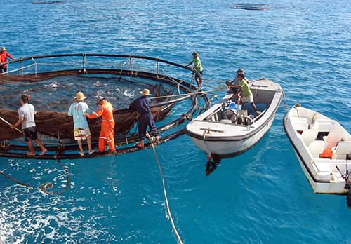 Ngư dân Quảng Nam đánh bắt thủy sản trên biển Đông.