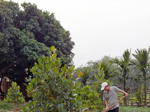 Nhiều người dân đã cải tạo vườn tạp chuyển sang trồng cây ăn quả. Ảnh: B.L