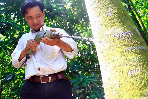 Ông Trương Công Lương khoan tạo trầm trên cây dó.Ảnh: PHƯƠNG GIANG