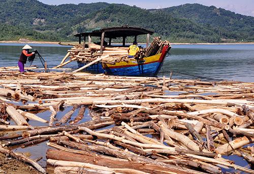 Tình trạng khai thác, vận chuyển gỗ trái phép vẫn phức tạp ở lưu vực rừng phòng hộ Phú Ninh.
