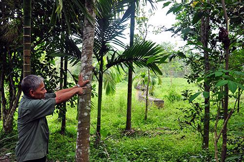 Ông Nguyễn Xuân Hường chỉ vị trí thửa đất xảy ra tranh chấp với hộ bà Nguyễn Thị Hồng.  Ảnh: H.G