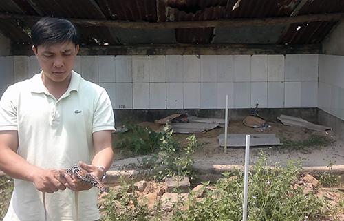 Nguyễn Thanh Tuấn triển khai thành công nhiều giống nuôi phù hợp với điều kiện khí hậu Quảng Nam. Ảnh: M.ĐỨC