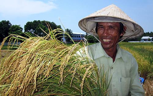 Nông dân rất phấn khởi vì lúa đông xuân được mùa trên diện rộng.