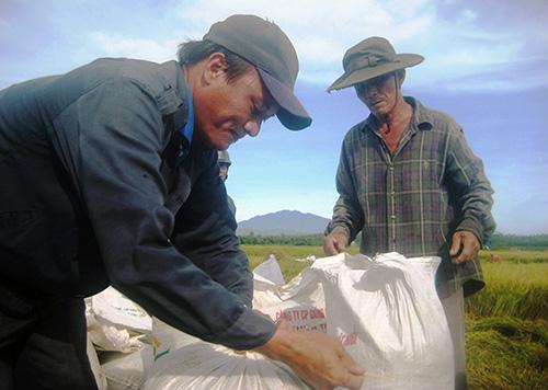 Dù được mùa nhưng nông dân không vui vì giá lúa thương phẩm liên tục giảm mạnh.Ảnh: VĂN SỰ