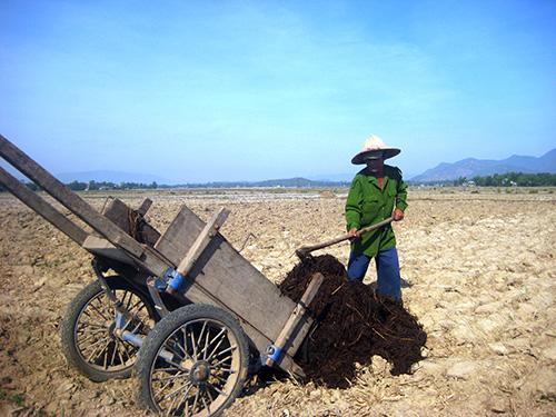 Nhiều cánh đồng ở xã Điện Ngọc cày xong để đó vì thiếu nước. Ảnh: Văn Sự