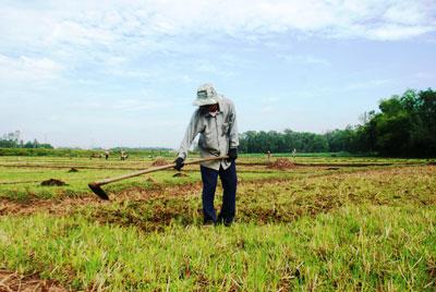 Do hồ chứa nước Cây Thông bị cạn kiệt nên 33ha đất ruộng ở xã Quế Thuận vẫn chưa gieo sạ được. Ảnh: VĂN SỰ