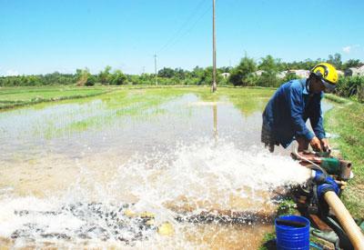 Lắp đặt máy bơm dã chiến tận dụng mọi nguồn nước ngọt tưới cho cây trồng.