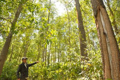Ông Nguyễn Chỉnh bên vạt rừng trồng, nơi xảy tranh chấp giữa nhóm hộ ông với nhóm hộ ông Trần Hân. Ảnh: H.G