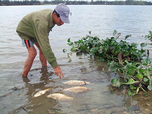 Nguồn nước bị ô nhiễm nên cá tôm chết hàng loạt.   Trong ảnh: Cá chết trên sông Bàn Thạch thời điểm năm 2010. Ảnh: H.PHÚC