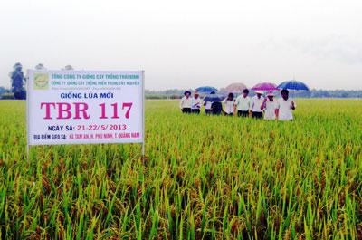 Tham quan ruộng trình diễn giống lúa thuần mới TBR117 tại xã Tam An (Phú Ninh) sáng qua 27.8.