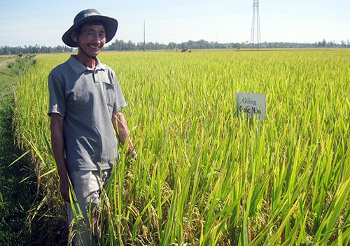 Nông dân vui vì được mùa lúa lai. Ảnh: V.PHIN