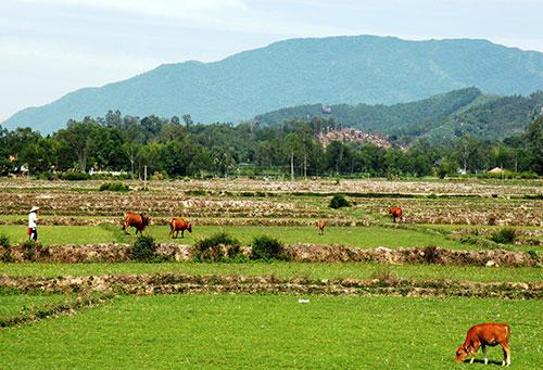 Nếu hồ chứa Lộc Đại được xây dựng thì cả trăm héc ta đất lúa ở xã Quế Thuận (huyện Quế Sơn) sẽ không bỏ hoang như thế này.Ảnh: V.SỰ