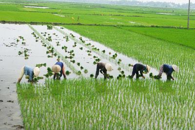 Người dân nông thôn rất cần vốn để phát triển sản xuất, mua sắm thiết bị, cơ giới hóa nông nghiệp.                  Ảnh: T. Dũng