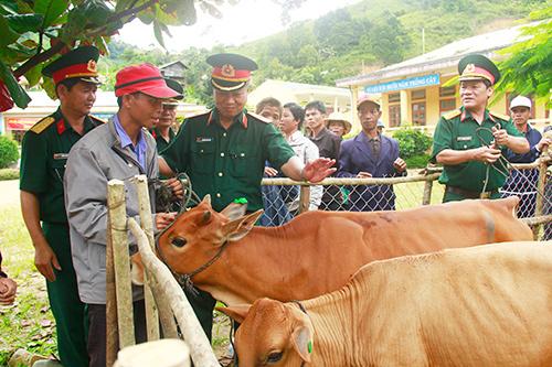 Cần đổi mới tư duy, đổi mới cách làm trong việc tìm kiếm, phát triển sinh kế cho đồng bào miền núi.  Trong ảnh: Hỗ trợ bò nuôi theo nhóm hộ ở Tây Giang.