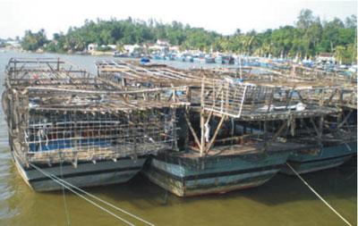Nhiều tàu câu mực khơi ở Bình Minh nằm bờ. Ảnh: T.C.H