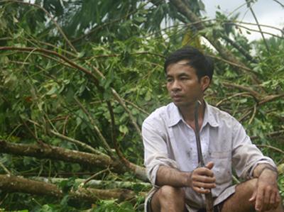 Anh Trần Văn Trí thẫn thờ trước vườn cao su đổ rạp vì bão. Ảnh: P.GIANG