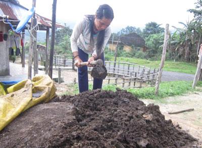 Từ chỗ canh tác tự nhiên, người dân đã dùng phân vi sinh để bón cho cây lúa tốt hơn.Ảnh: D.T