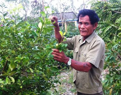 Cựu chiến binh Vũ Công Đích trong vườn nhà. Ảnh: THANH TƯỜNG