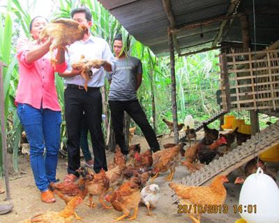Mô hình nuôi gà thả vườn đem lại hiệu quả kinh tế cho người dân Tây Giang.                                      Ảnh: A.CÚI