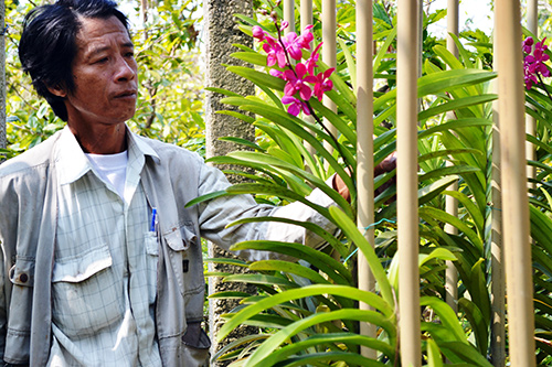 Anh Bùi Quang Trung chăm sóc hoa lan Mokara.Ảnh: Q.VIỆT