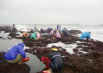 Nhiều người dân đổ xô đi hái mứt biển. Ảnh: THIÊN NGA