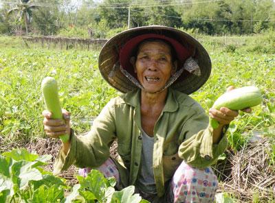 Vụ này, bà Lê Thị Tiến ở thôn Thanh Ly 2 (Bình Nguyên, Thăng Bình) thu về 13 triệu đồng tiền lãi từ việc canh tác 1,5 sào dưa gang trên đất lúa.