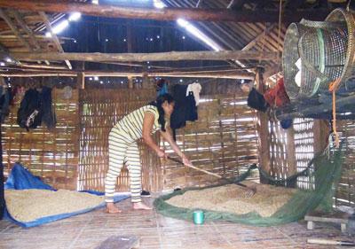 Do mới chuyển về nơi ở mới nên người dân thôn K'la phải phơi lúa ngay trong nhà bếp.