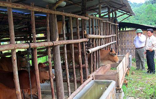 Chuồng trại chống rét cho trâu, bò tại các địa phương của huyện Tây Giang.Ảnh: Đình Hiệp
