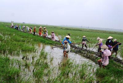 Nông dân thôn An Lạc (xã Duy Thành, huyện Duy Xuyên) ra quân dồn điền đổi thửa. Ảnh: V.S