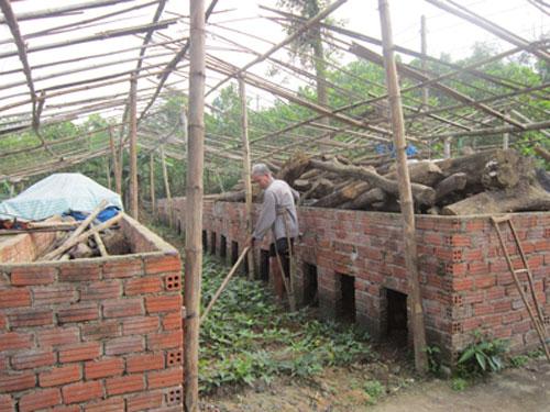Nhiều lò sấy cau ở Tiên Phước đã đóng cửa.                           Ảnh: D.T