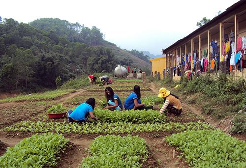 Các em học sinh nội trú chăm sóc vườn rau.