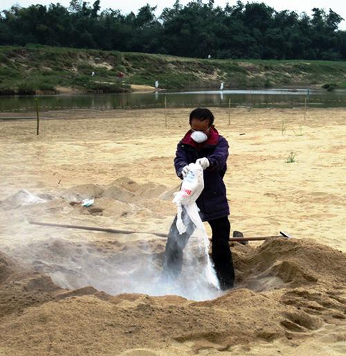 Rắc vôi bột trên hố tiêu hủy những đàn vịt bị nhiễm dịch ở xã Duy Châu vào trưa 27.1.