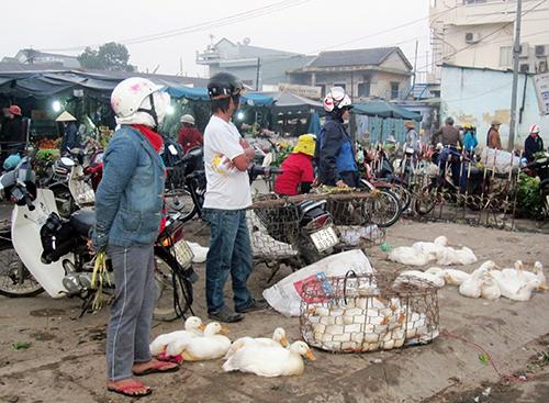 Thời điểm cận tết, ngành chuyên môn cần siết chặt công tác kiểm dịch tại các chợ buôn bán gà vịt sống.