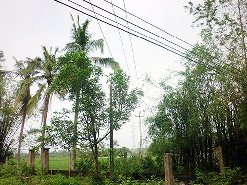 Lưới điện nằm trong diện di dời tại thôn Thái Cẩm (xã Điện Tiến, huyện Điện Bàn) phục vụ xây dựng đường cao tốc.