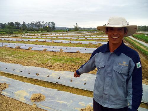 Ruộng dưa hấu xuân - hè ở huyện Phú Ninh.