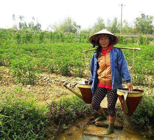 Do mặn thường xuyên xâm nhập vào trạm bơm điện Tứ Câu nên nông dân xã Điện Ngọc (Điện Bàn) đang gặp khó khăn trong chuyện tưới tiêu.