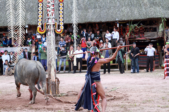 Buffalo stabbing ceremony - the most sacred event of the festival.
