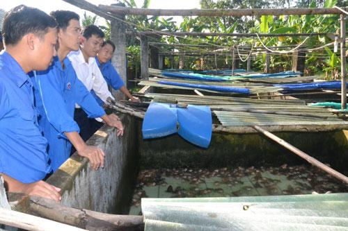 Thăm trang trại nuôi ếch của anh Lê Văn Thành (Điện Bàn).
