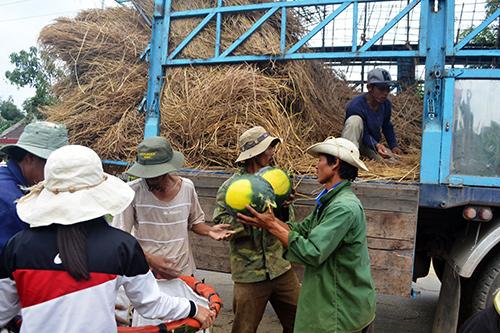 Thương lái đưa xe tải để mua dưa của người dân xuất khẩu sang Trung Quốc.