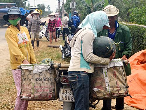 Nhiều tiểu thương ở các chợ đến mua dưa hấu về bán.
