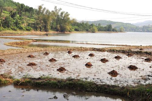 Đất sản xuất hiếm hoi, người dân Hốc Tráng canh tác theo con nước.