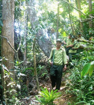 Kiểm lâm tuần tra rừng chung vùng giáp ranh.  Ảnh: T.H