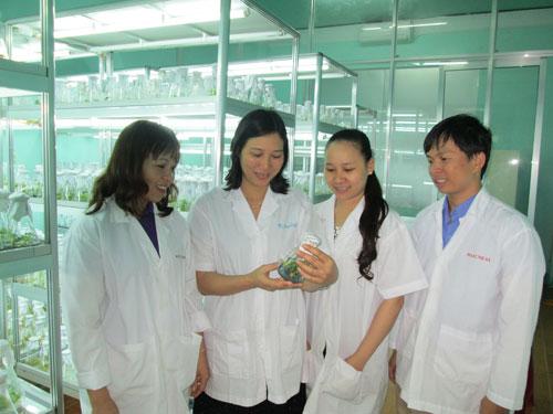 Chọn lọc những cây sâm Ngọc Linh có đủ tiêu chuẩn để đưa vào huấn luyện trước khi di thực trên núi Ngọc Linh (2.2014).