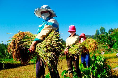 Phát triển các mô hình sản xuất đem lại kỳ vọng giúp dân xóa đói giảm nghèo. Ảnh: PHƯƠNG GIANG