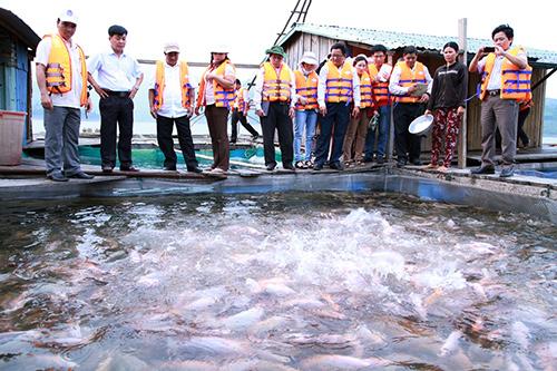 Mô hình nuôi cá lồng bè trong lòng hồ thủy điện Sông Tranh 2, một trong những tín hiệu vui của việc thay đổi tư duy đầu tư cho miền núi.