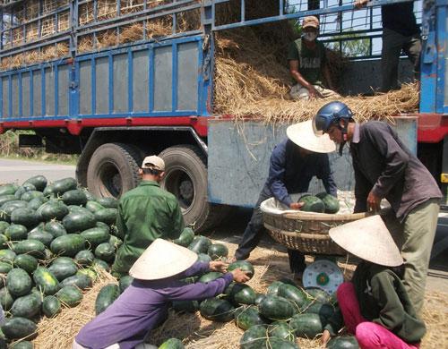 Giá dưa 7.500 đồng/kg tại xã Tam Phước sáng 10.4. Ảnh: V.H