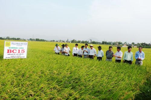 Lãnh đạo Sở NN&PTNT kiểm tra cánh đồng mẫu lớn ở xã Đại Hòa.