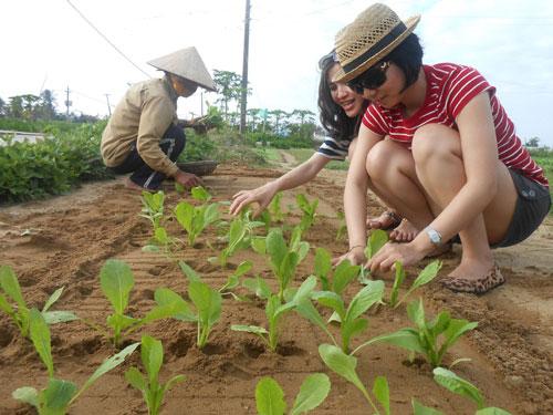 Khách tập trồng rau ở Trà Quế. Ảnh: N.D